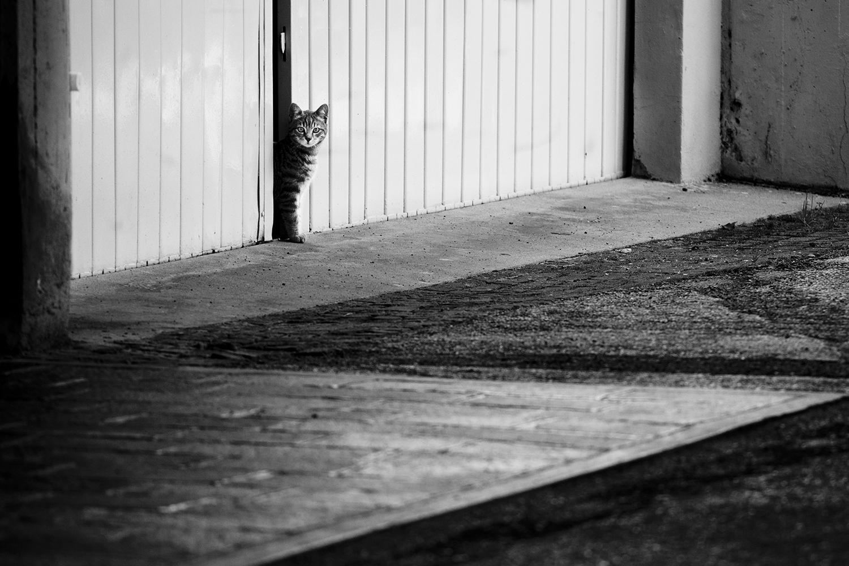 11_Cats_1728