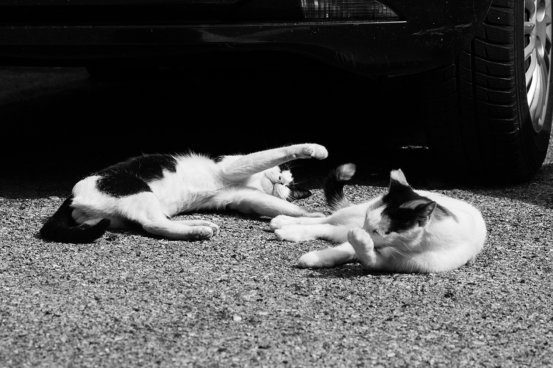 16_Cats_5740