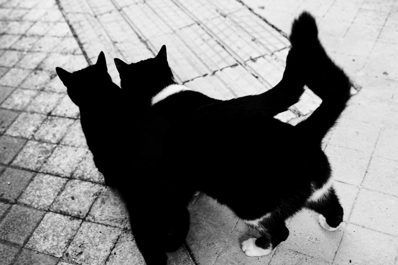 17_Cats_0587