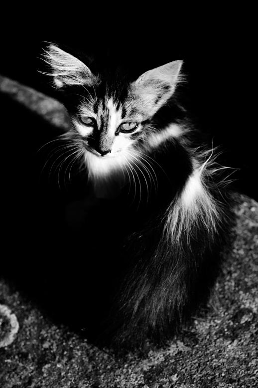 21_Cats