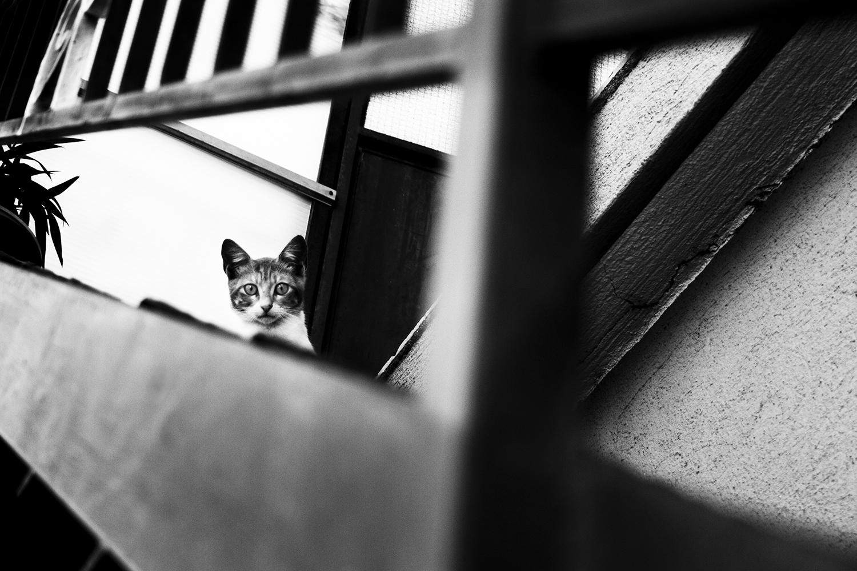 27_Cats_7621