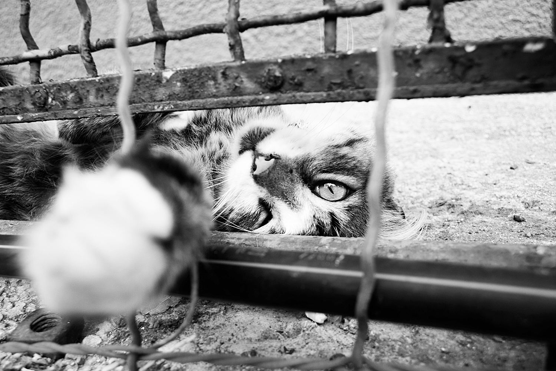31_Cats
