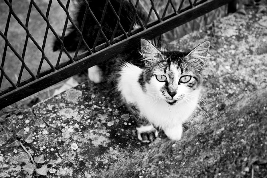 32_Cats