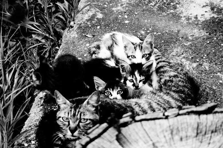 34_Cats