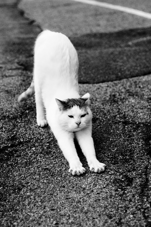 38_Cats_9984