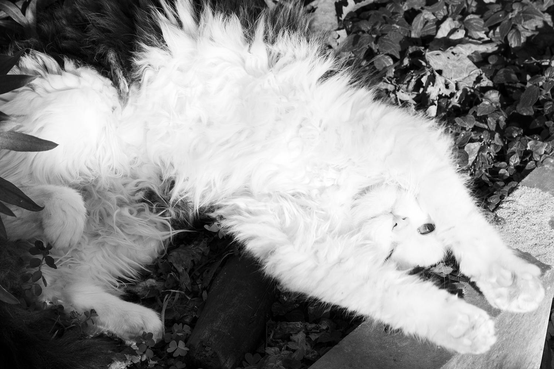 39_Cats_8808
