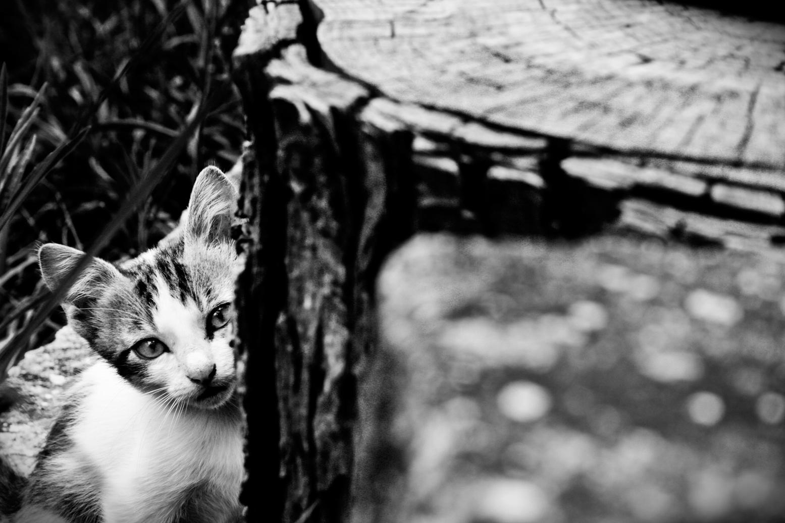 6_Cats