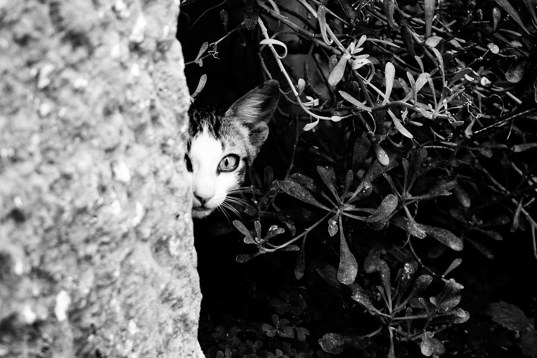 7_Cats