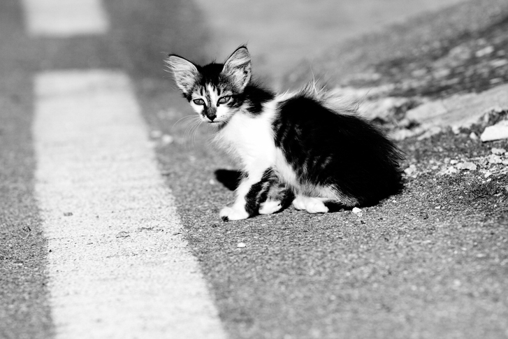 8_Cats