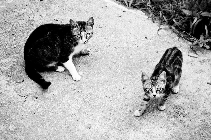 9_Cats