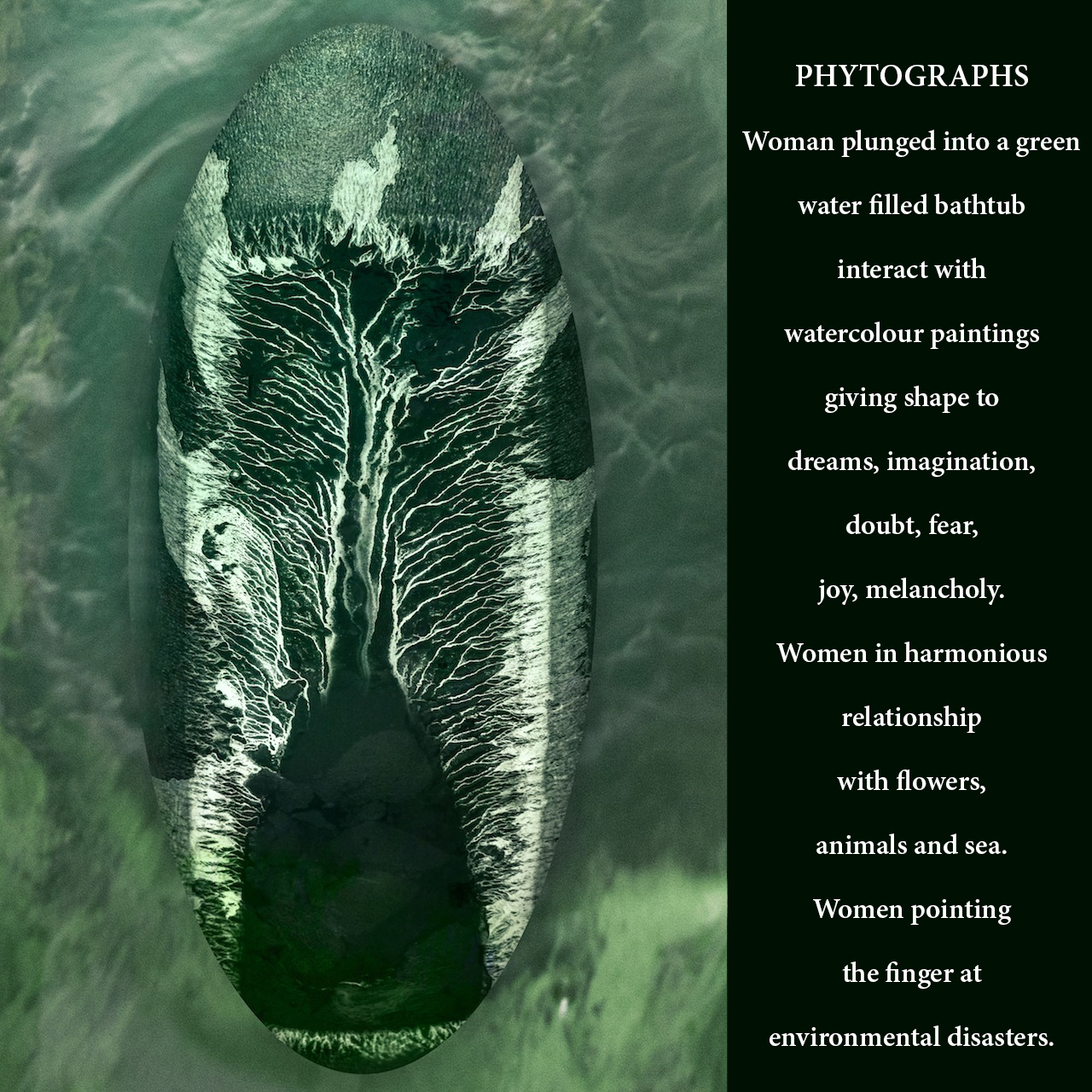 FITOGRAFIE